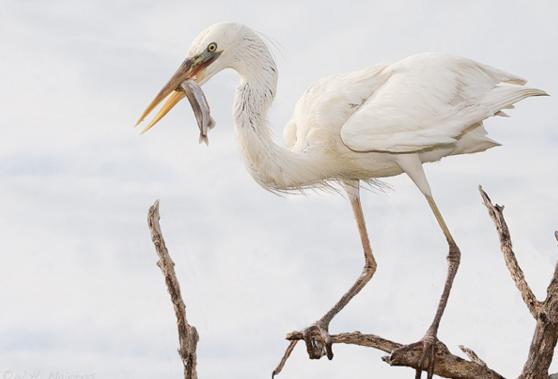 spring-bird-migration